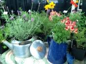 Bloomsday Festival at UT Gardens