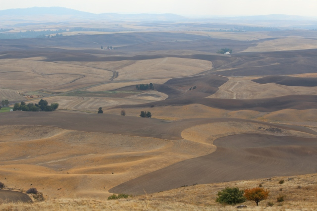 The Palouse as seen from Steptoe Butte
