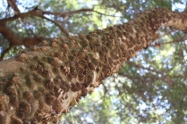 Close-up of interesting tree trunk