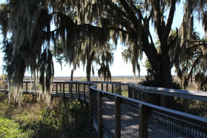 Gentle curves of the boardwalk and draping trees