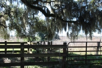 Gate used as cattle pen