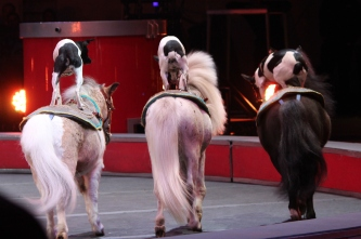 Three ponies, three dogs: Ringling Bros. Circus