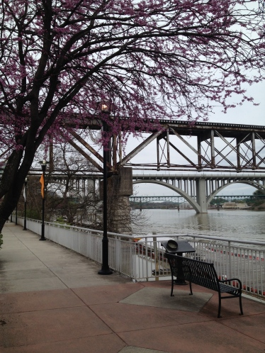 Redbuds along Knoxville's Lake Loudon