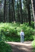 Walking trail at Kamiak Butte