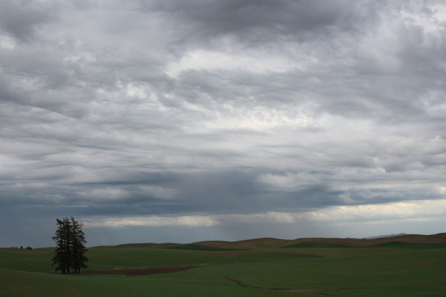 A threatening Palouse sky at dusk.  Is that rain in the distance?