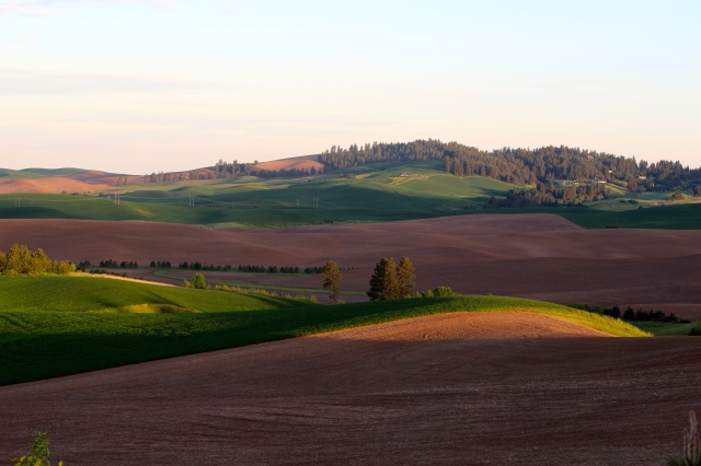 Early morning light -- Palouse
