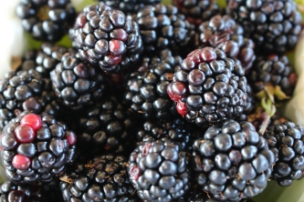 Huge cultured blackberries