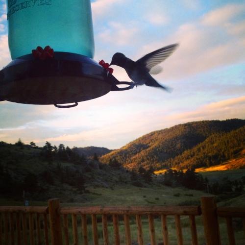 Early morning at Colorado ranch