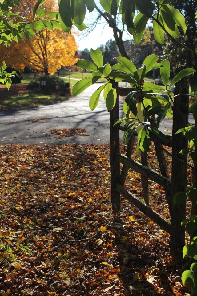 Through the gate at Maple Grove Inn, Knoxville
