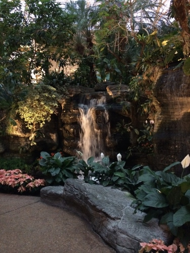 Banks of pink poinsettias  line the area near a waterfall in the Garden Conservatory