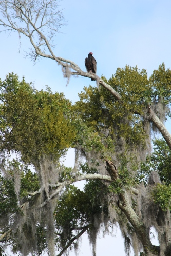 Bird perched high above, Fort Frederica