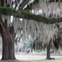 Coasting: Three reasons to stroll through Fort Frederica on St. Simons