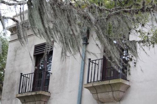 Spanish moss, windows with balconies -- St. Augustine