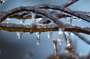 ice-coated branch
