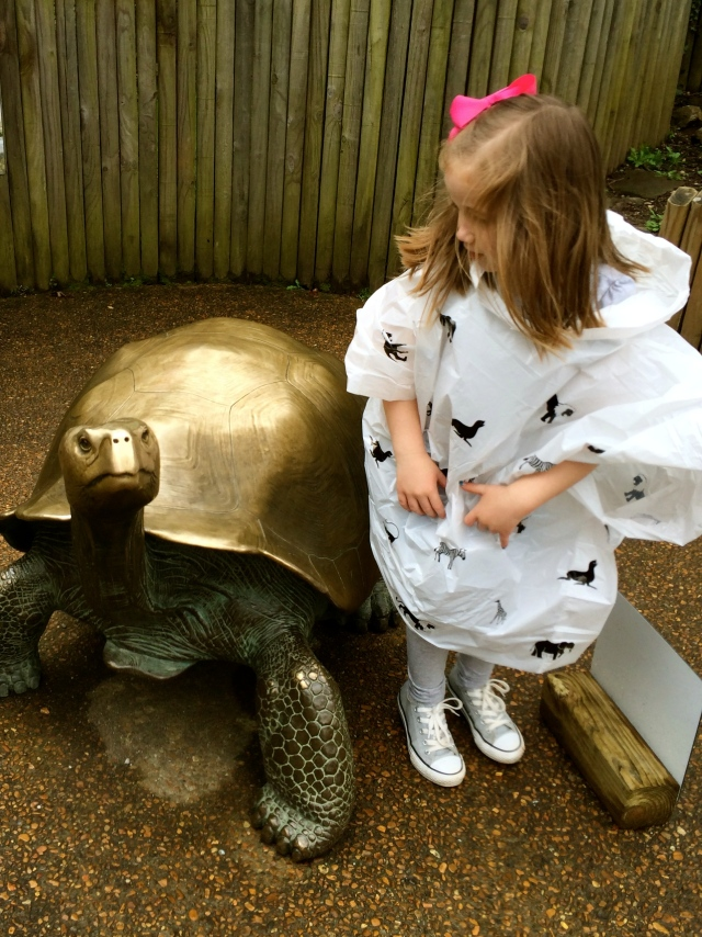 Smooth bronze turtle -- Knoxville Zoo