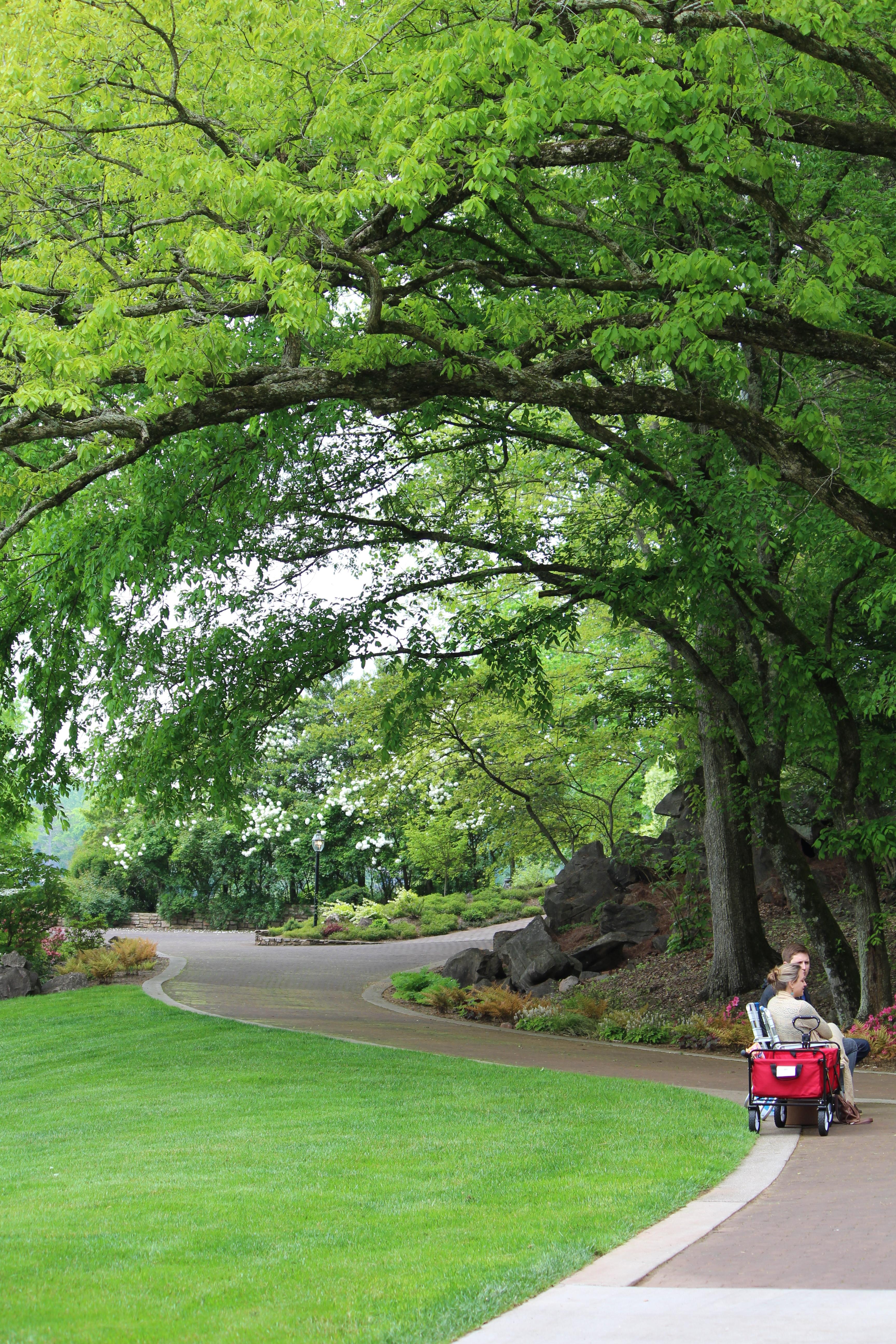 Lane Hays S Garden A Dogwood Featured Garden 2015 Oh