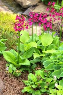 Brilliant pinks in the garden of Sandi Burdick