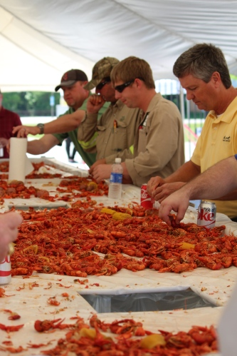 Peeling crawfish at the Thank-You Dinner at Turner Industries, Decatur, Alabama.