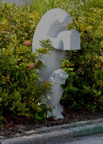 Manatee enveloping a mailbox