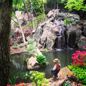 Natural landscaping with a little help from Lane Hays!