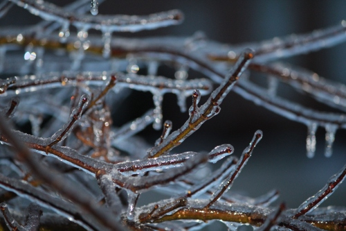 Branches coated with ice -- Knoxville, Tennessee