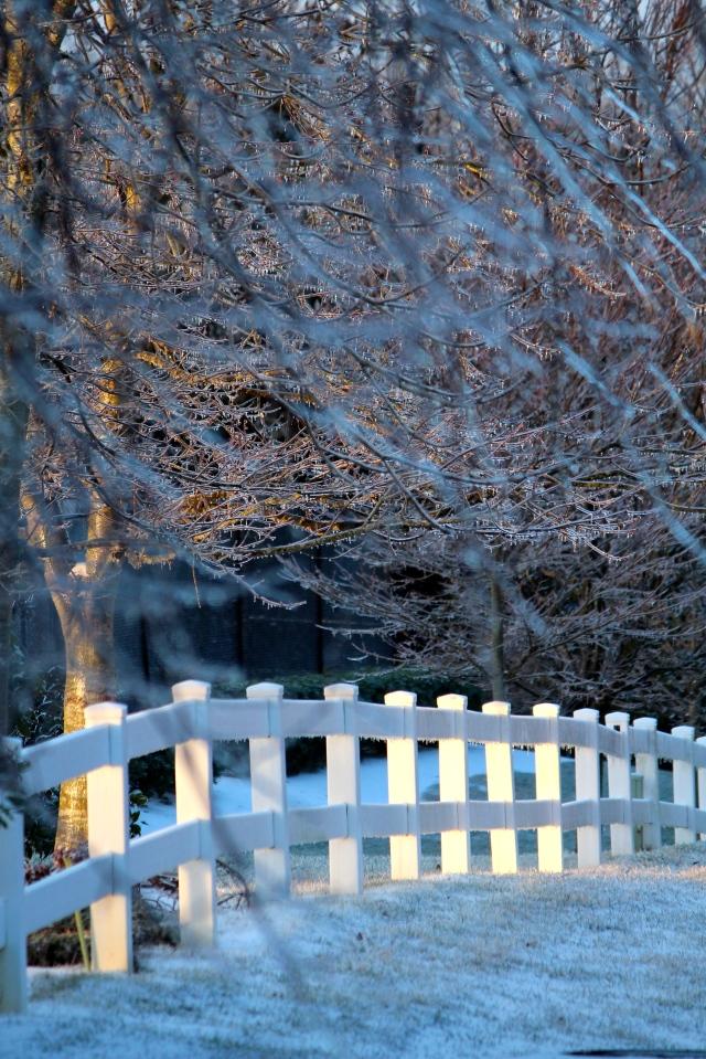 View from my back door -- ice storm, Winter 2014.