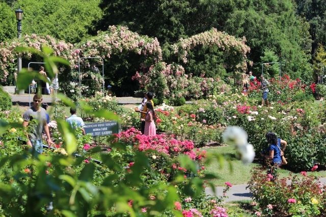 Visitors roam the neatly marked roses at Portland's International Rose Test Garden.