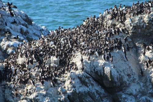 Ask a ranger to tell you which birds are on which rocks at Yaquina Head Lighthouse.  But ask the ranger to speak up -- so you can hear over the screeches!