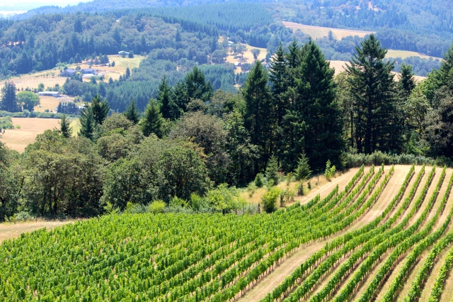 View from the front porch -- Youngberg Hill Winery, McMinnville, OR.