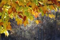 View of leaves at Pipestem Arboretum