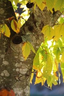 Sunlight on leaves at Pipestem Arboretum