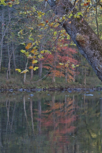 Fall reflections -- Pipestem State Park in West Virginia