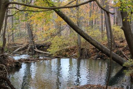 Waters feeding into Falling Spring Falls