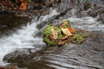 Fall scene at Covington, VA