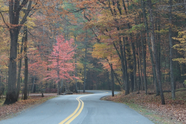Fall color in George Washington National Forest, Virginia