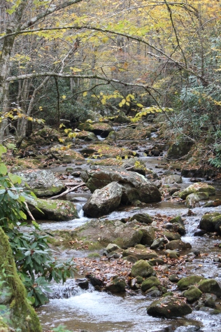 Mountain stream at Rocky Fork State Park in our home state: Tennessee!