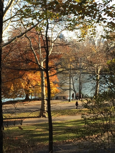 A walk in the park -- Central Park, December 2015.