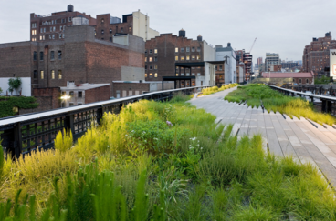 Beautiful picture of the plantings along the High Line from Friends of the High Line website: www.thehighline.org