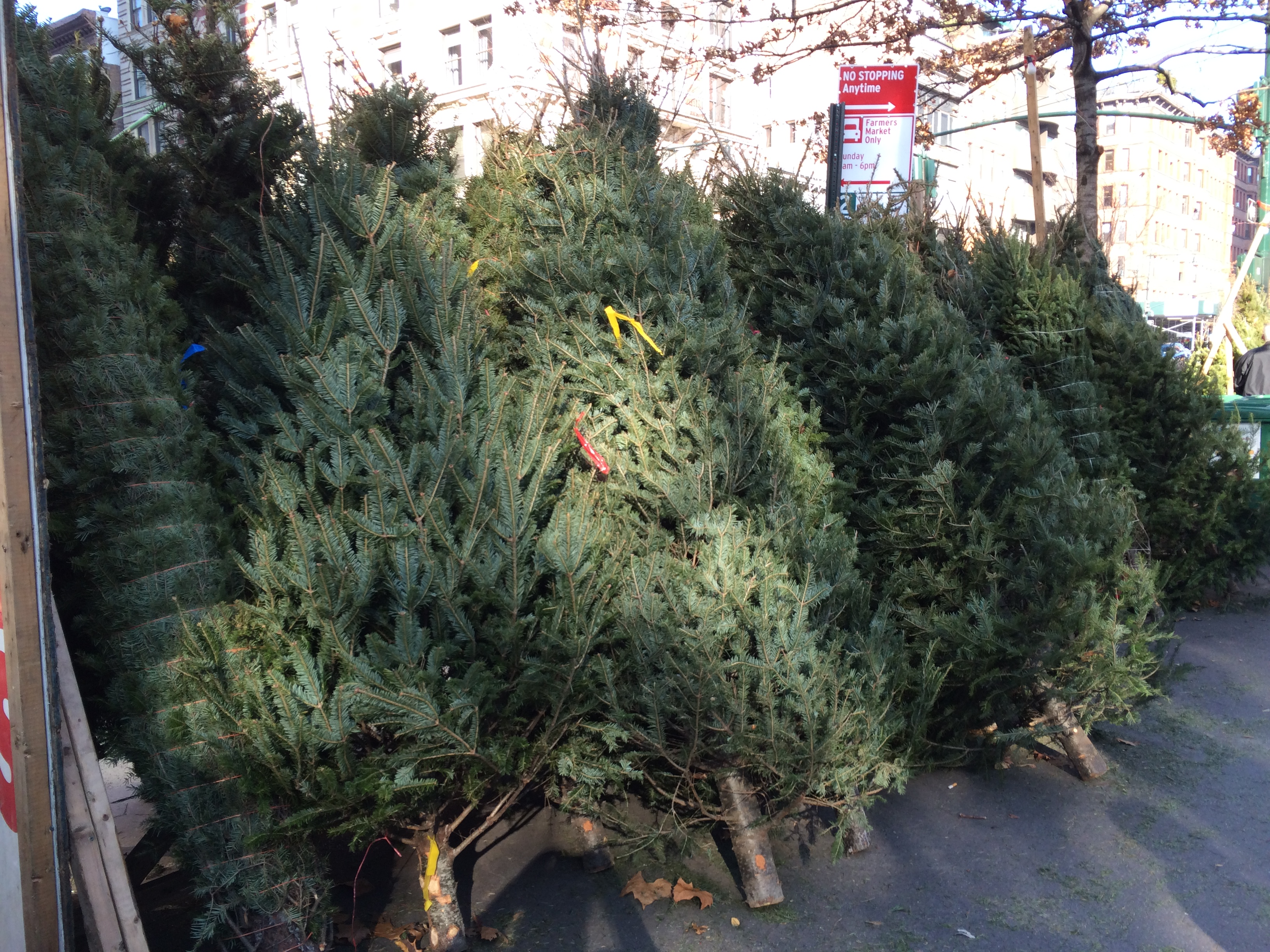 Trees of New York: Christmas Holiday 2015 | Oh, the Places ...