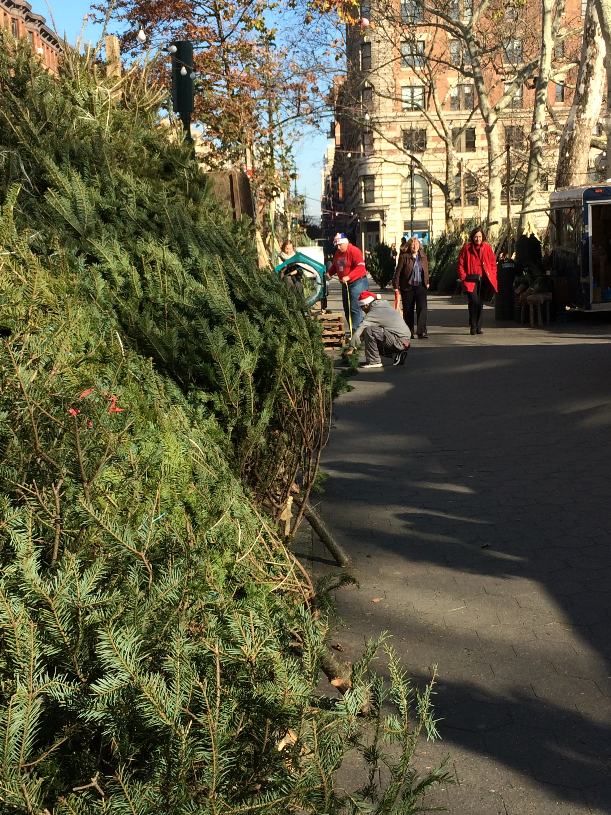 Christmas trees at a NYC street market | Oh, the Places We See . . .