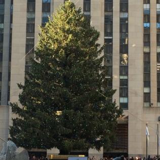 Rockefeller Center Tree 2015