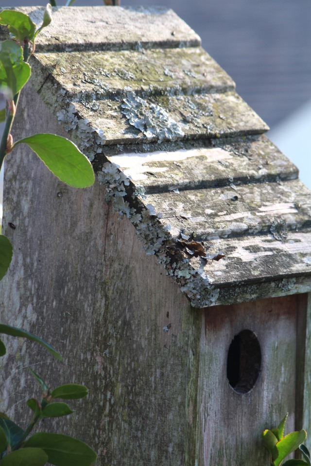 A weathered birdhouse ready for new residents.