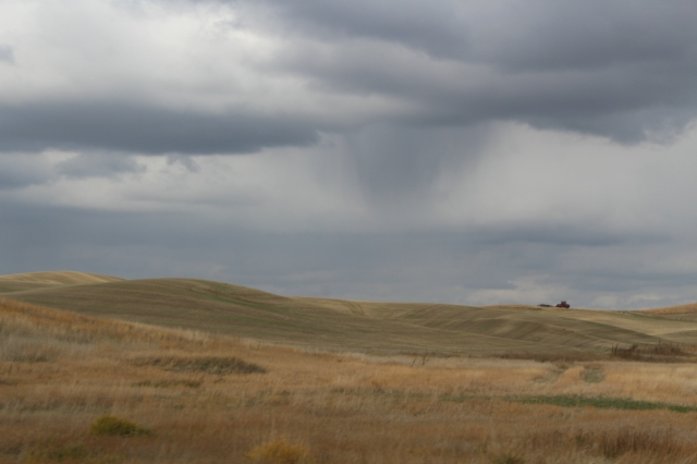 A menacing sky adds drama to the fields of the Palouse