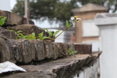 Nature finds a way to get into cracks and cause damage -- while remaining pretty!