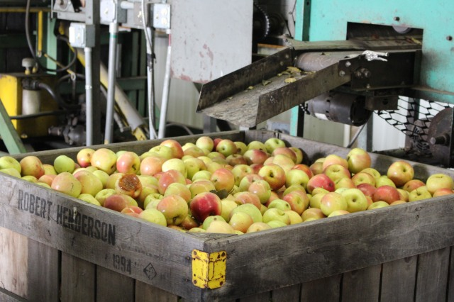 Sorting apples at Henderson Farms, Hendersonville, NC