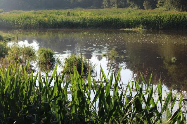 Pond in Flat Rock, North Carolina