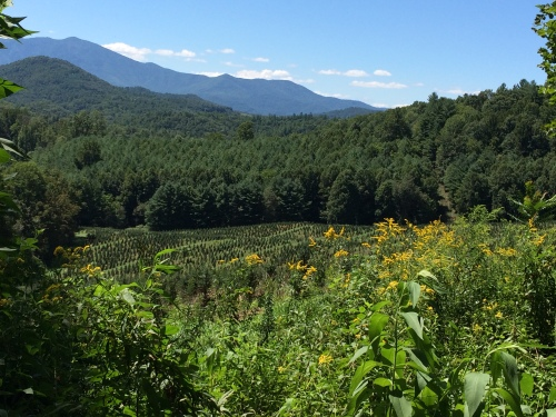 Mountains, trees, fields -- oh, the beauty of North Carolina in summer.