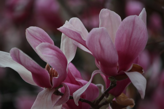Early morning light offers barely pink, almost purplish color.
