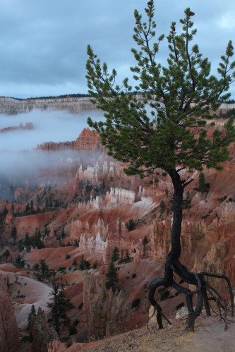 The view past the tree at Bryce Canyon.