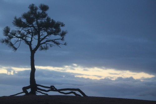 Balanced on the edge was this single tree, roots extended, welcoming the morning light.
